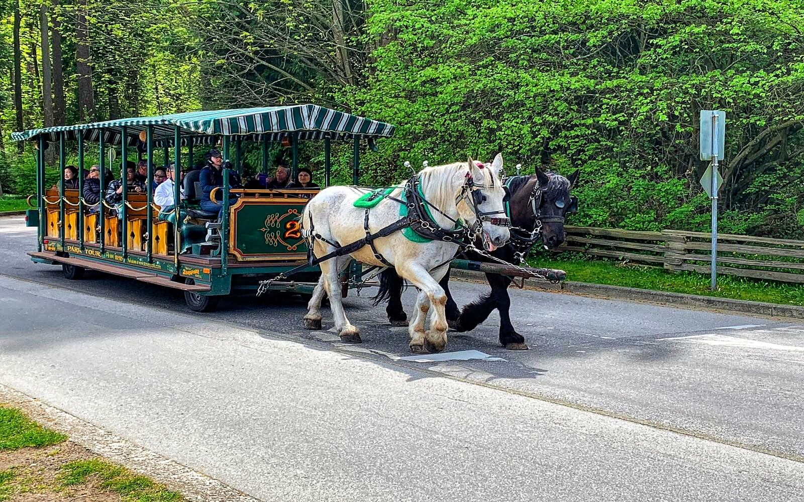 A horse drawn tour at Stanley Park