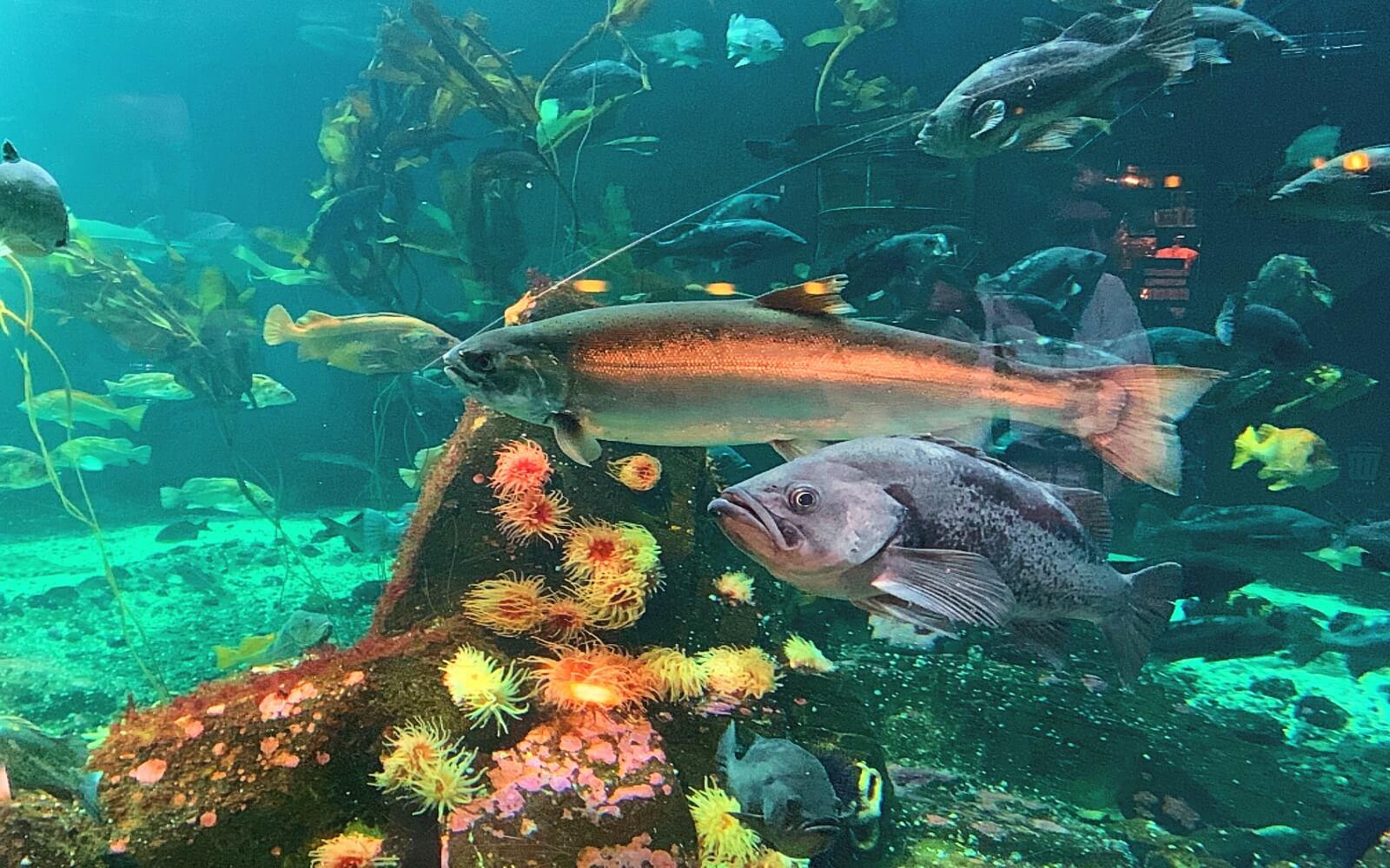 Fish at the Treasures of BC Coast