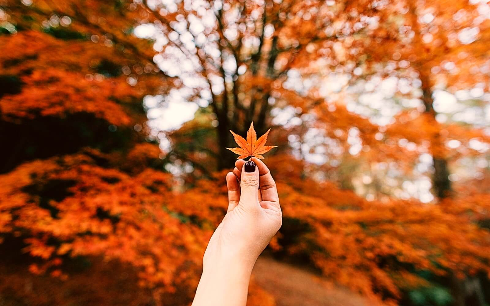 A woman holds a small leaf in fall