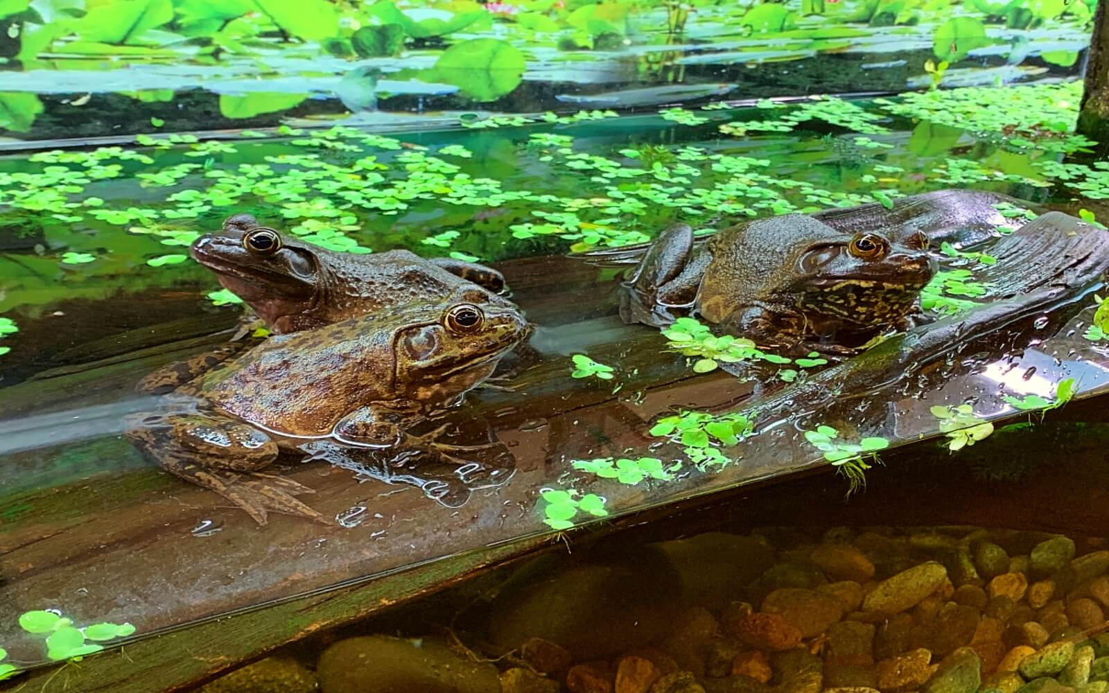 The Frogs Forever Gallery at the Vancouver Aquarium
