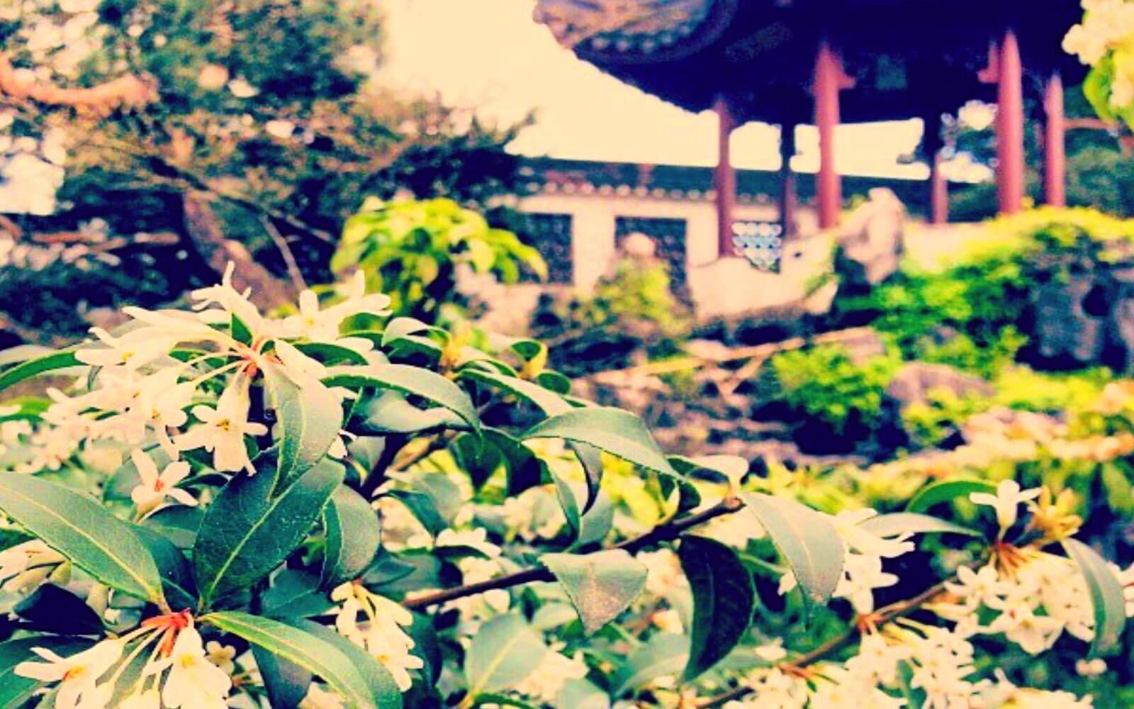 Plants at the sun Yat-Sen Classical Garden