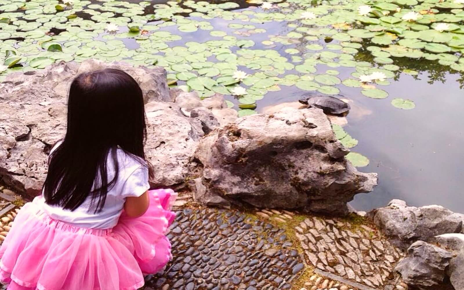 Little girl watches a turtle at the Sun Yat-Sen Classical Garden