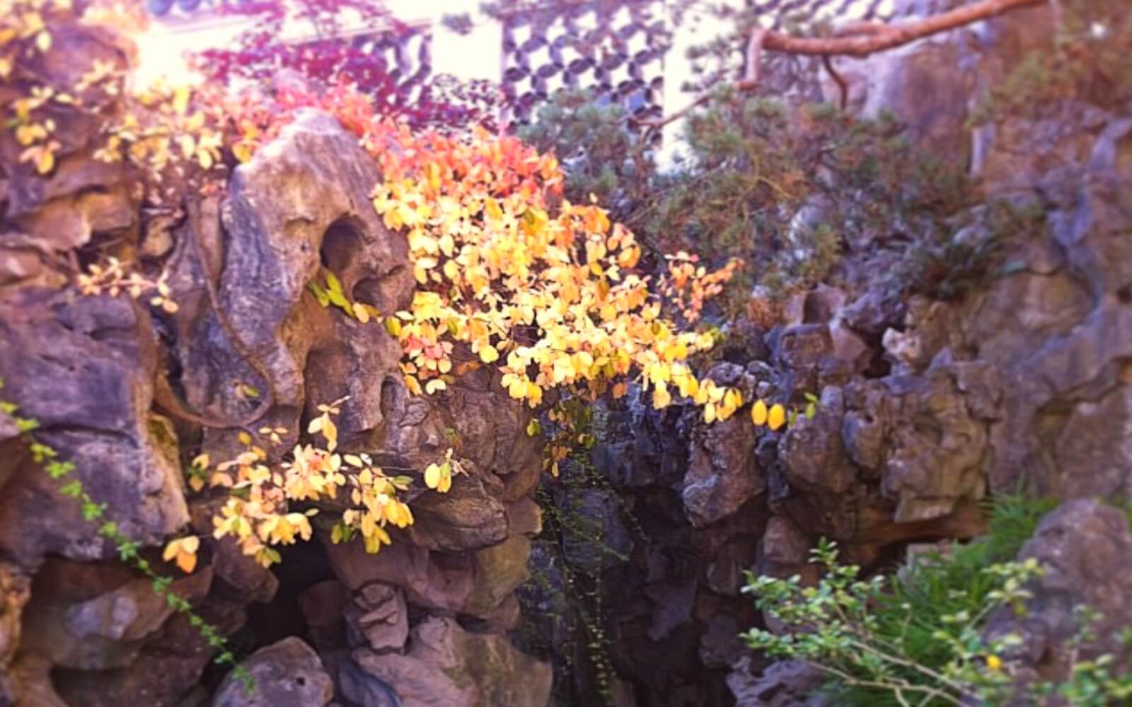 Rocks and flowers at the Sun Yat-Sen Classical Garden