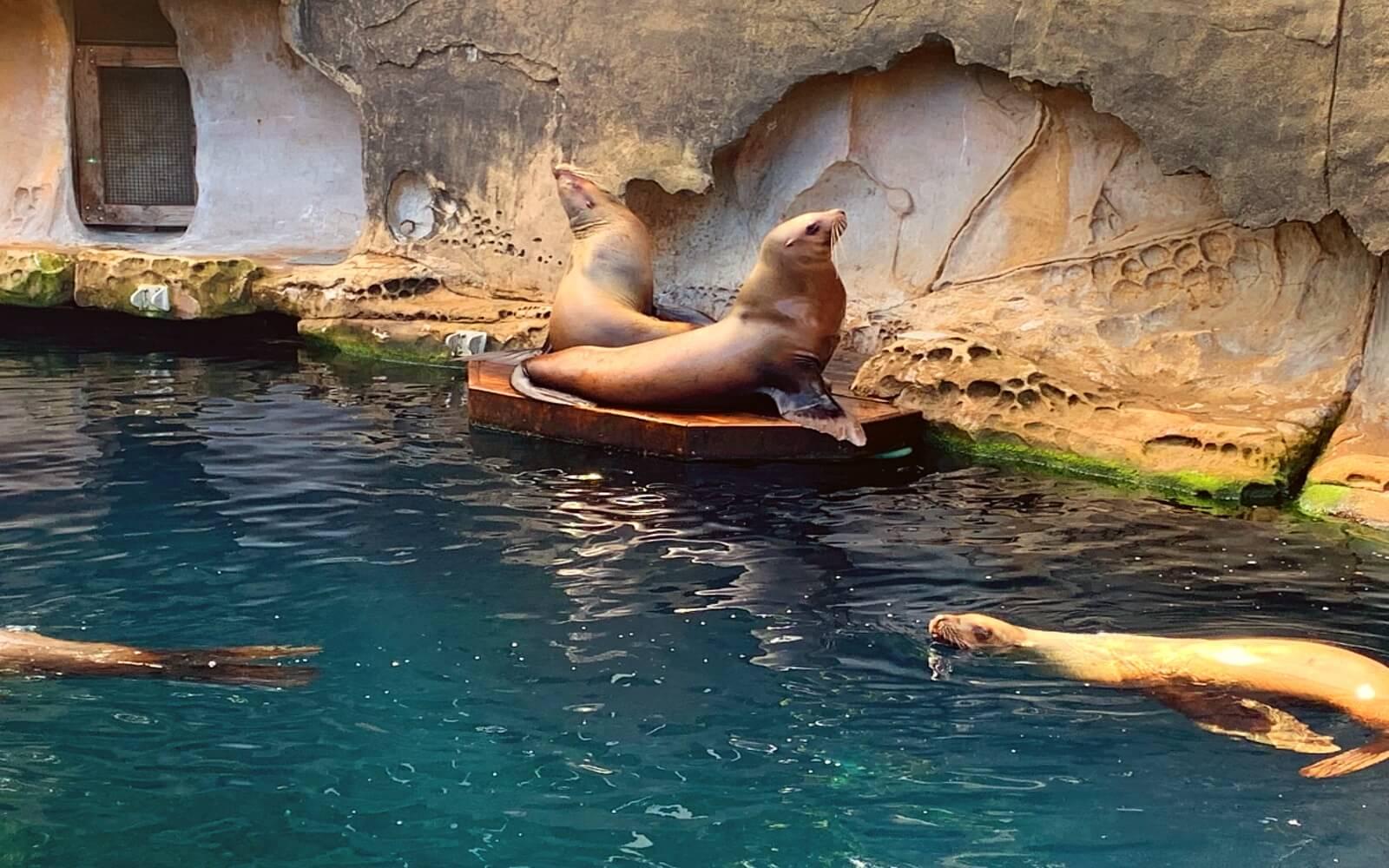 The Sea Lions at Stellars Bay, Vancouver Aquarium