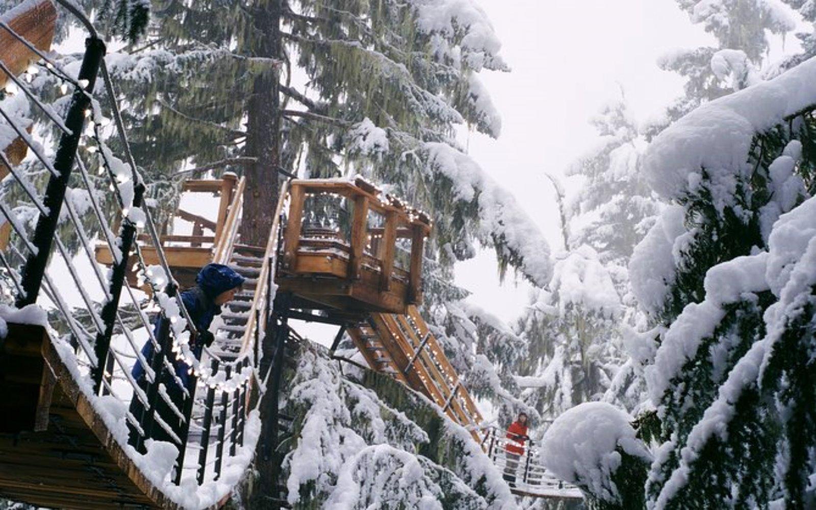 A man enjoys the Whistler Canopy Walk Adventure