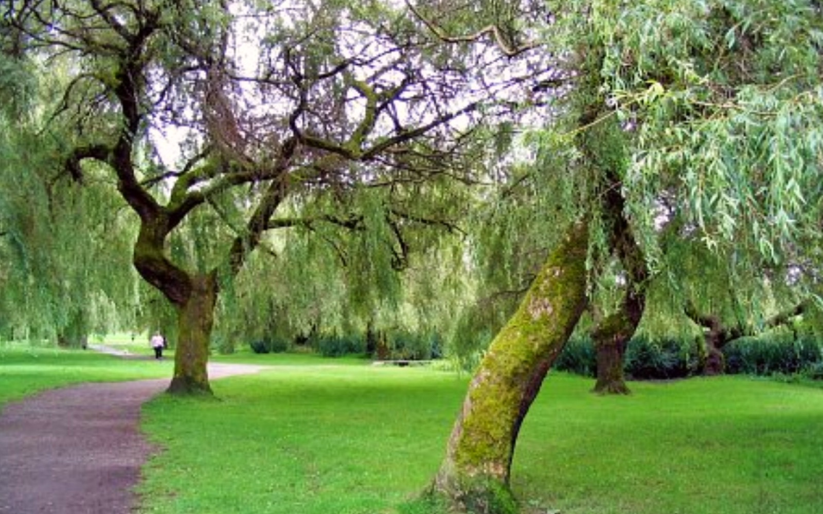 The trees at John Hendry Park, East Vancouver