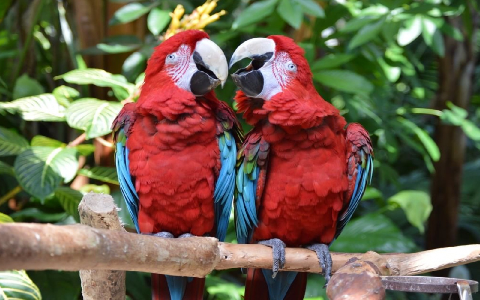 A pair of tropical birds, Bloedel Conservatory